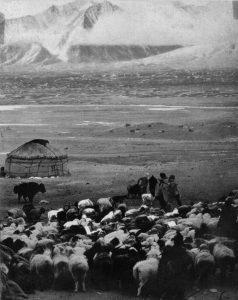 किरगीझियातील मेंढपाळी